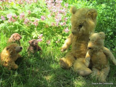 Buddy Bear and Archie visit their cousins in the wild