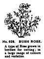 Bush Rose, Britains Garden 028 (BMG 1931).jpg