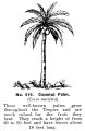 Coconut Palm Tree, Britains Zoo No919 (BritCat 1940).jpg