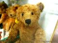George the Steiff Bear.jpg