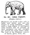 Indian Elephant, Britains Zoo No901 (BritCat 1940).jpg