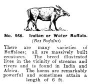Indian or Water Buffalo, Britains Zoo No968 (BritCat 1940).jpg