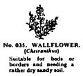 Wallflower, Britains Garden 035 (BMG 1931).jpg