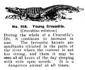 Young Crocodile, Britains Zoo No958 (BritCat 1940).jpg
